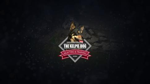 THE KELPIE DOG Selecting & Training