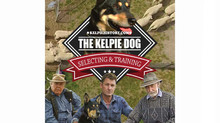 THE KELPIE DOG Selecting & Training