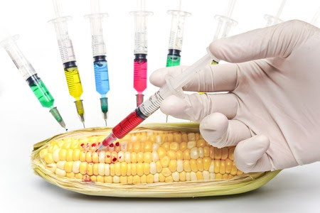 GMOs - What exactly are they and can they lead to cancer?