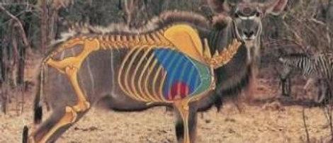 Target A0 Kudu
