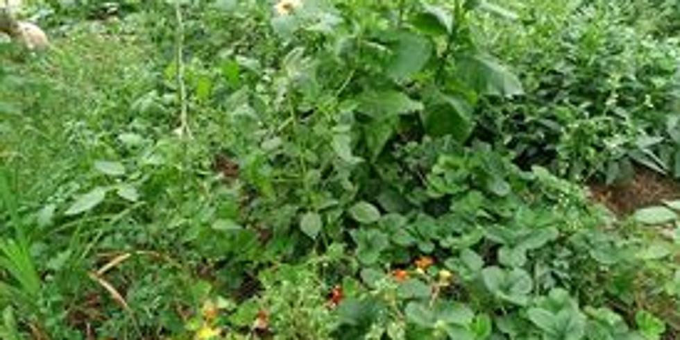 Voedselbos &  Moestuin Learnshop#2 : Combinatieteelt, plantenkeuzes en elementenfuncties, door Koenda