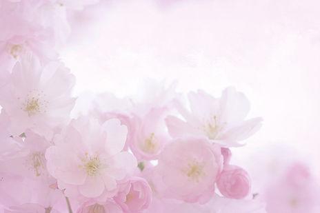 pink-2160666_1920-3.jpg