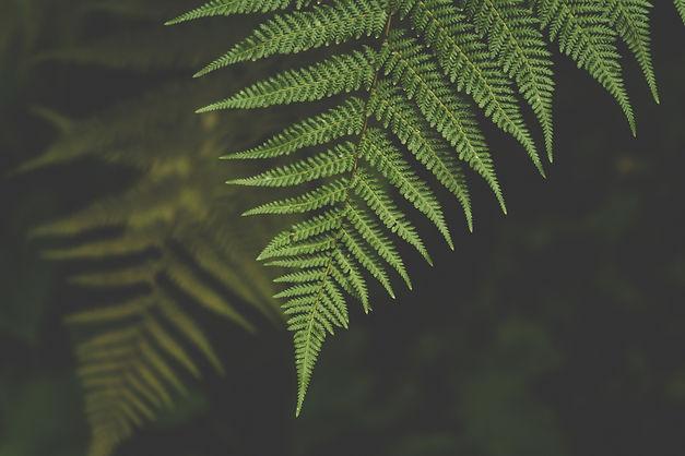 green-leaves-1495160.jpg