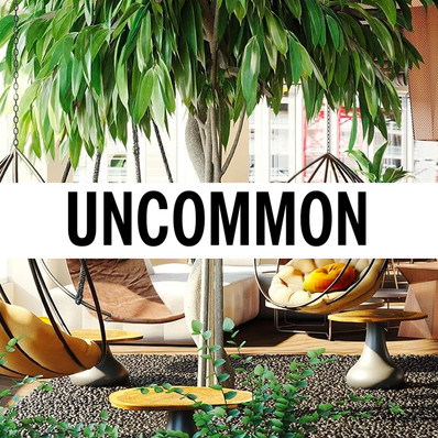 Uncommon-Be-A-Bear.jpg
