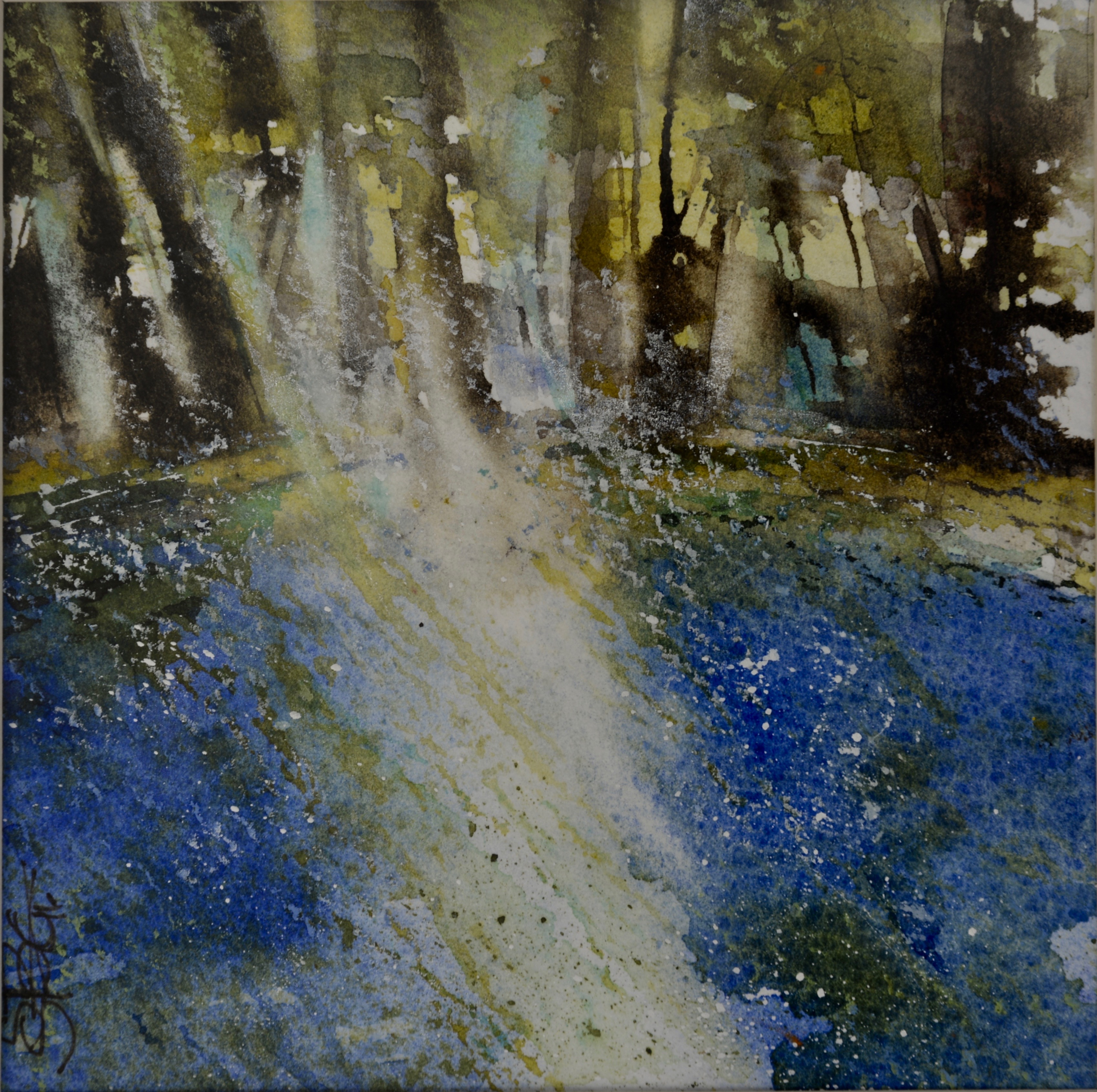 Early Morning - Bluebell Wood