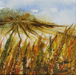 Autumn Hedgerow on The Ridgeway