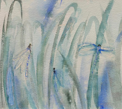 Dragonflies Rising From the Shallows