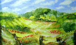 A Flash of Poppies on The Ridgeway