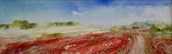 The Track through the Poppy Fields, High Summer