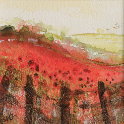 Poppies on the Ridgeway - Ipsden