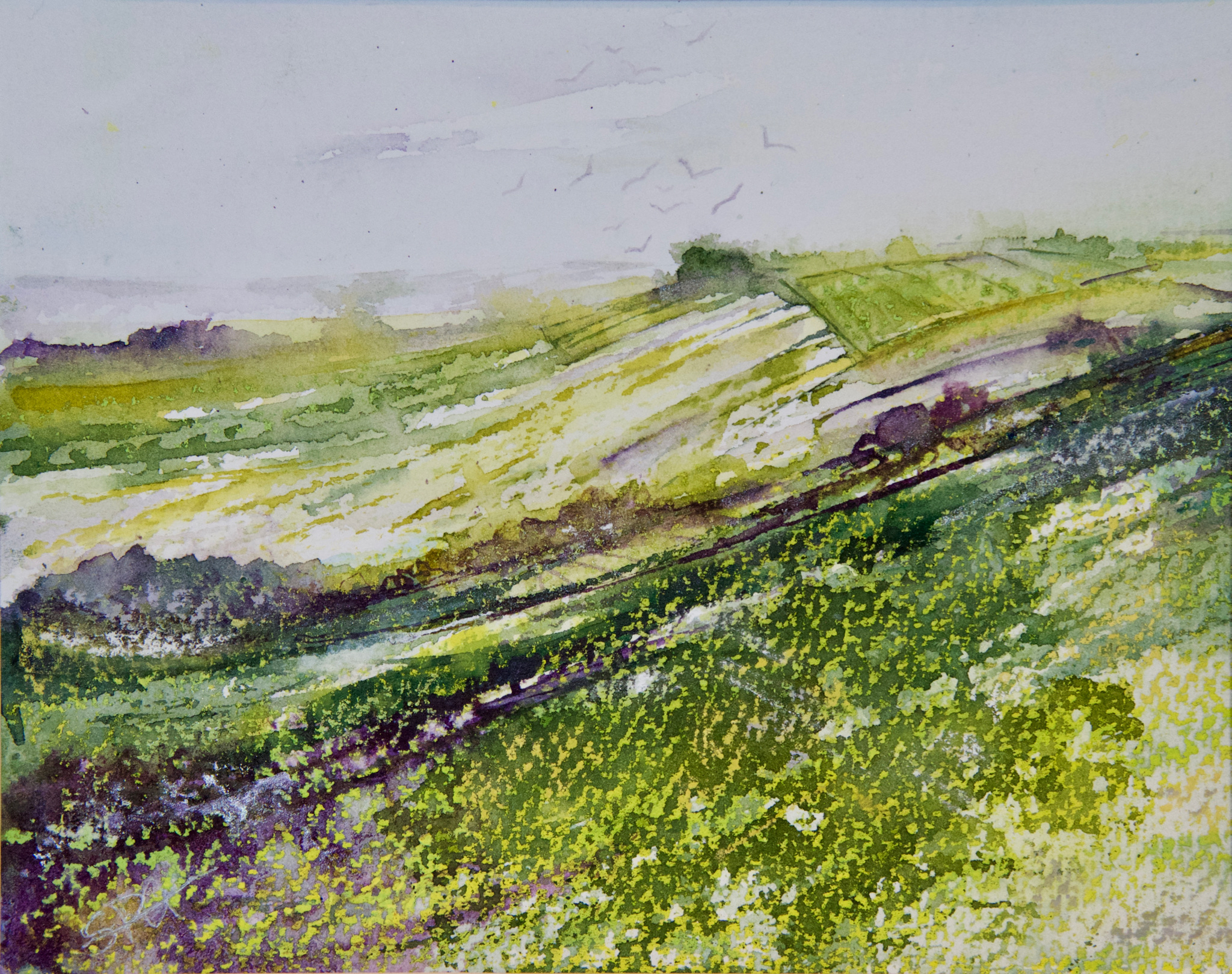 Kites and Cowslips on Wittenham Clumps
