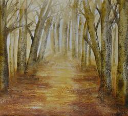 Crisp Autumn Morning - Nuffield Wood