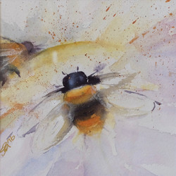 Bumblebees, Batteries of the Garden