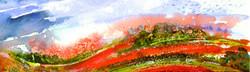 Summer Poppies Light the Ridgeway