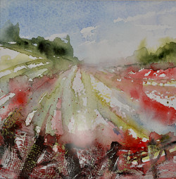 Summer Poppies on The Ridgeway