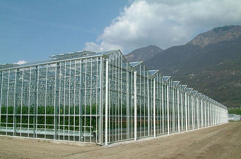 Wuhai tomato greenhouse