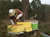 hives.jpg
