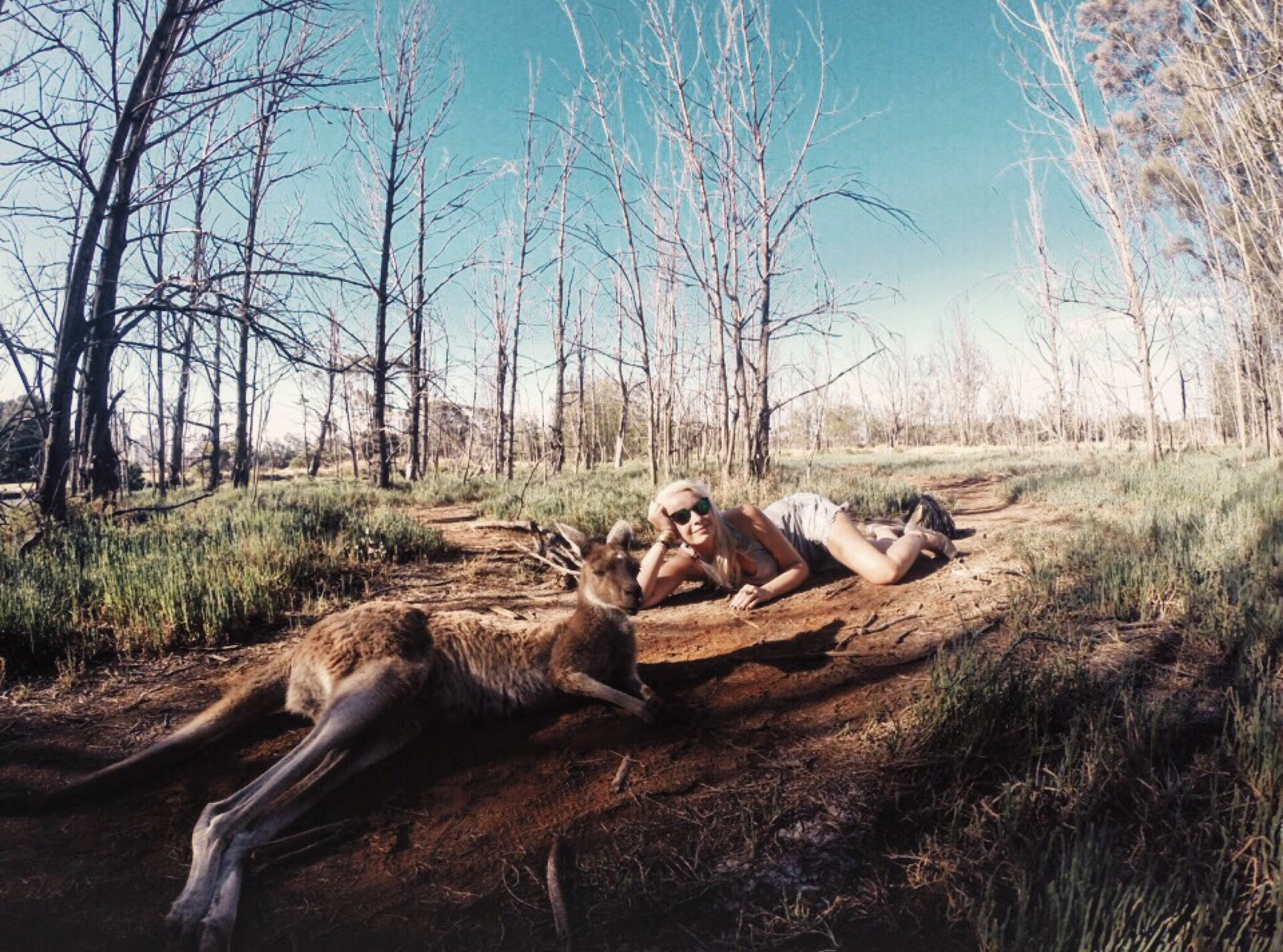 Chilling with the roos in Australia