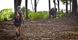 Walking wild elephants in India