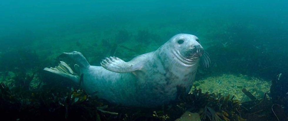 Seal_edited.jpg