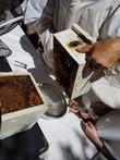 Native Bee Hive Split 2019
