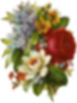 flower-2850244_960_720.png