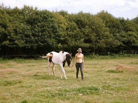 L'humain et ses appréhensions avec les chevaux