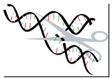 CRISPR/cas9: The Revolutionary Gene-Editing Tool