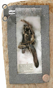 Sparrow (detail)