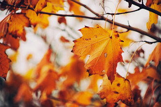 Why Fall is a Great Time to Clean Your Ducts!