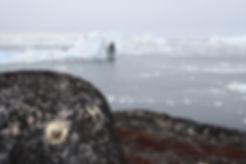 2 Arctic Consciousness.jpg