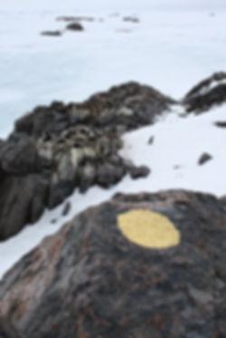 Antarctic Consciousness (2).jpg