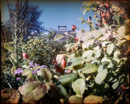 Ytterjärna Trädgårdspark
