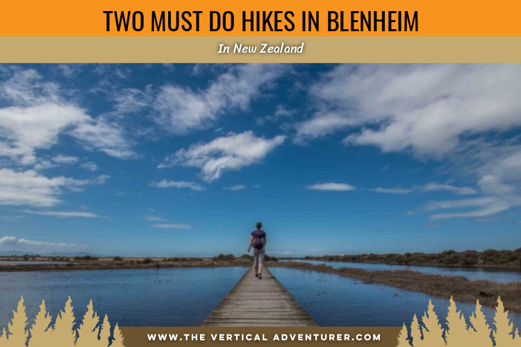 Two Must Do Hikes in Blenheim, New Zealand!