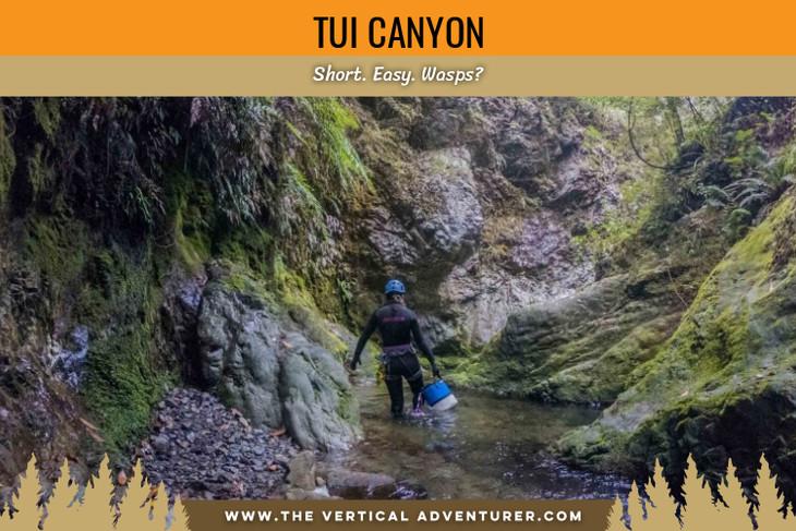 Tui Canyon. Short. Easy. Wasps?