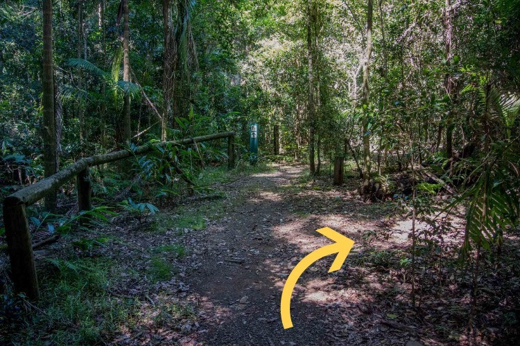 MILL RAIN FOREST SECRET SWIMMING HOLE go right