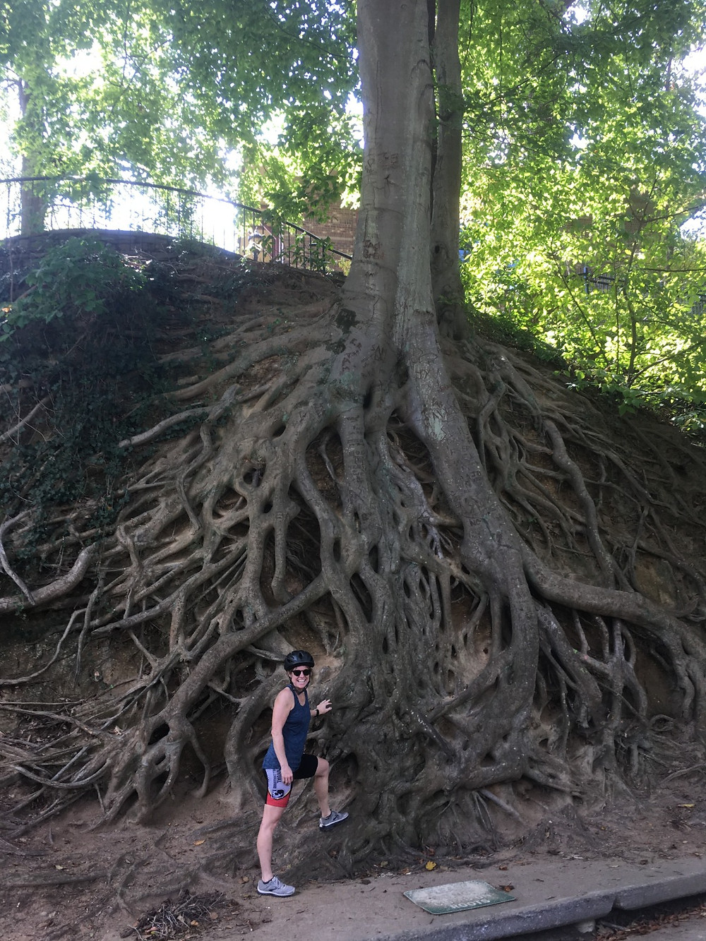roots firmly planted