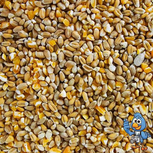 20kg Mix Corn