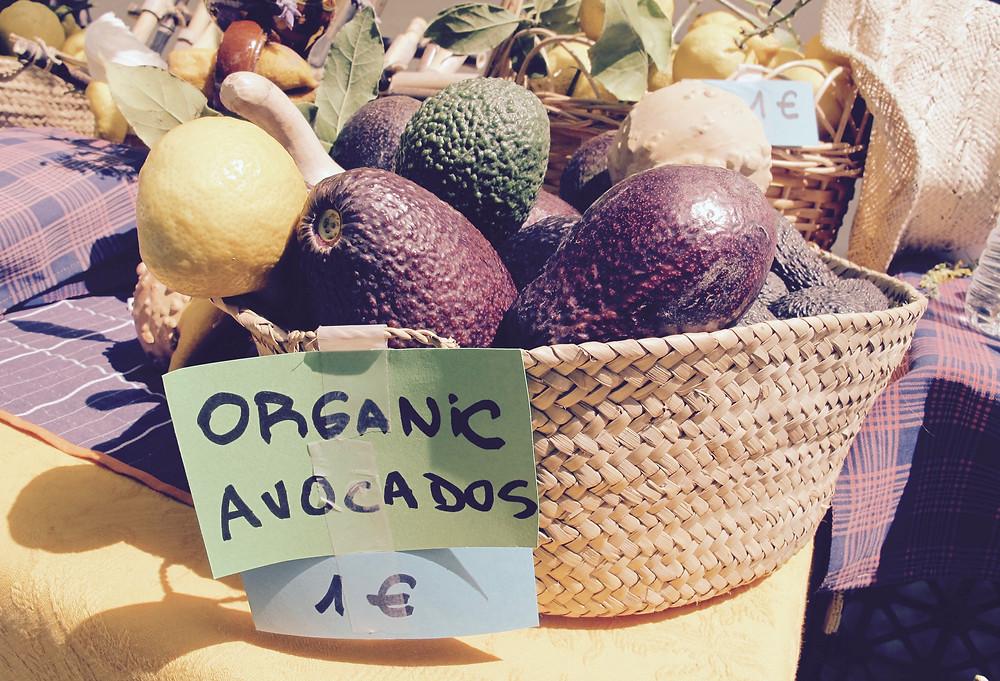 Organic Avocados in Mallorca