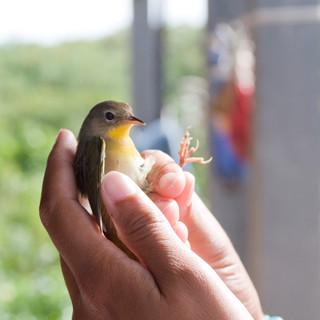 Bird Banding Program