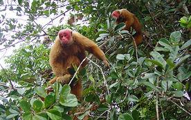 Amazon Ecopark_15.jpg