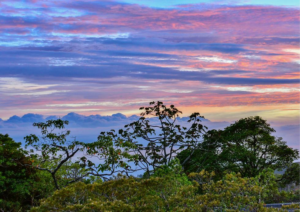 Monteverde_7.png