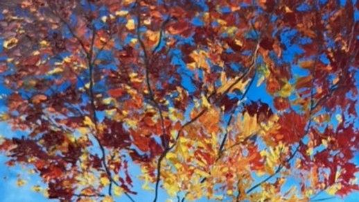 Autumn Maple 36x48
