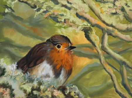 ROBIN Bird.jpg