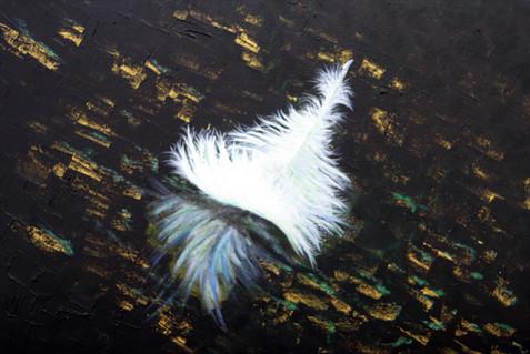 Feather on a dark pond.jpg