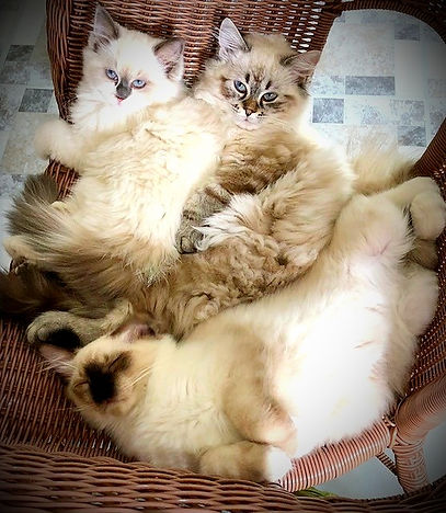 allcats_edited.jpg