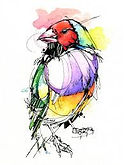 ladygouldianfinch.jfif