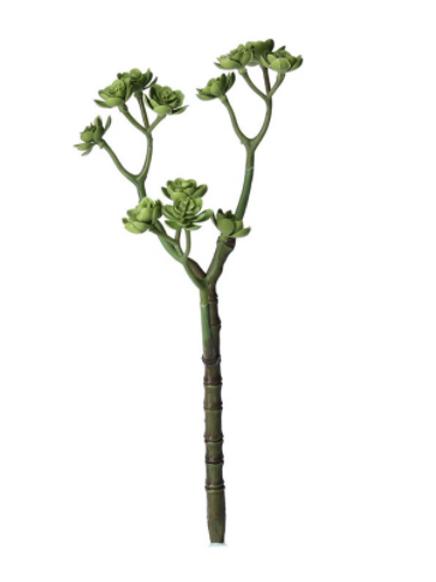 Echeveria Succulent 3 Arm