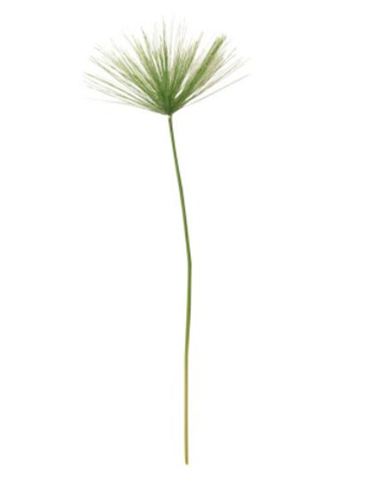 Umbrella Green Grass Stem