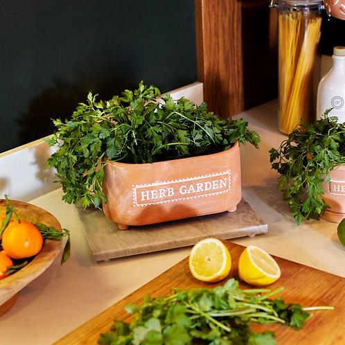 Herb Garden Terracotta Trough Planter